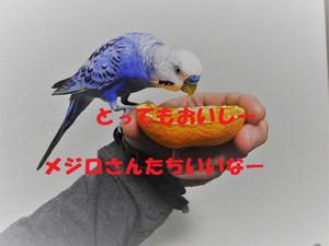 Dscn1384_2