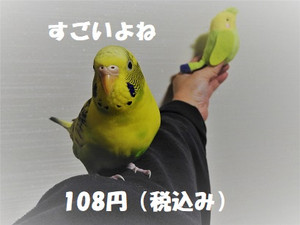 Dscn1414_2