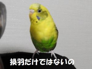 Dscn4645_2