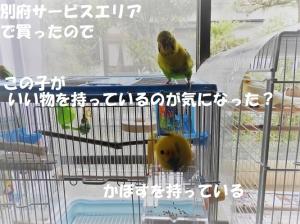 Dscn4850-2